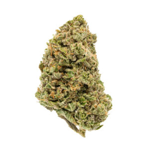 Pink Star Indica